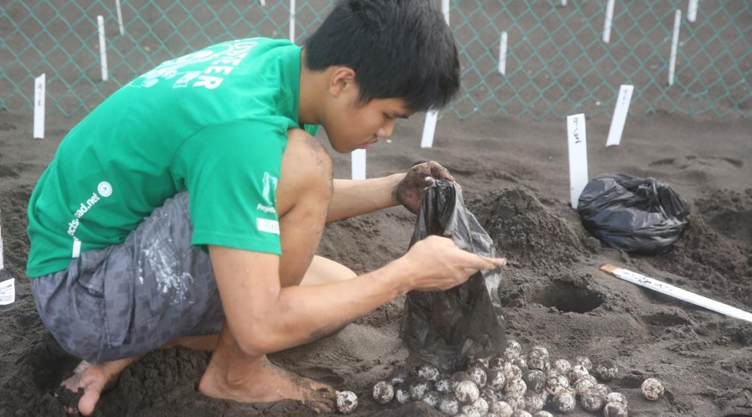 メキシコでウミガメの保護活動に取り組む日本人環境保護ボランティア